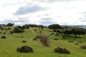 pastures jambon guijuelo salamanque