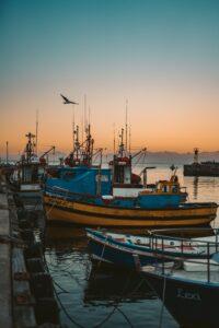 Navires de pêche portant des anchois